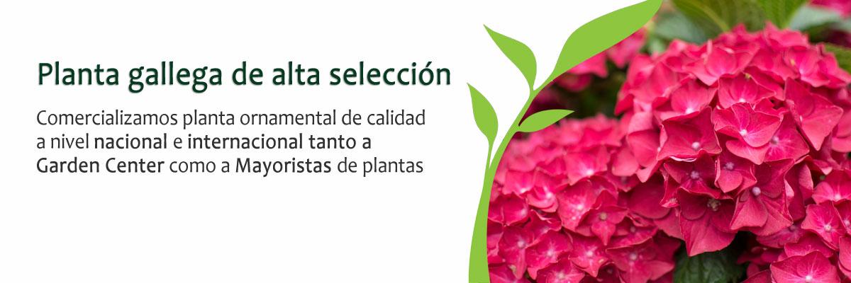 Coplant planta ormanetal