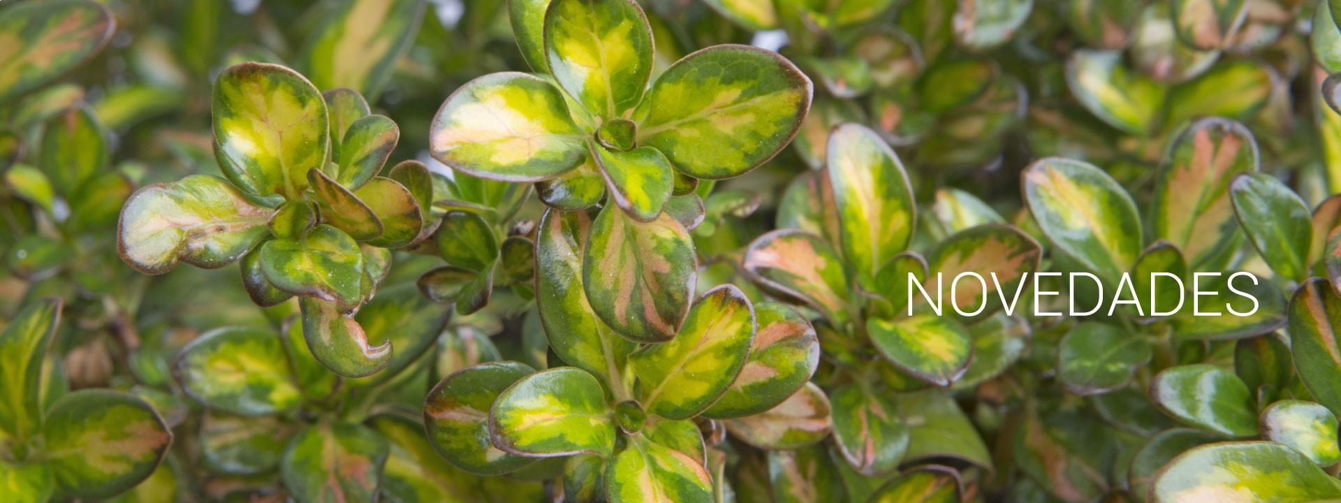 Novedades COPLANT planta ornamental