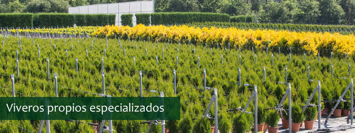 NUESTROS VIVEROS DE PLANTAS
