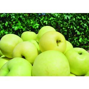 """Apple Me Yellow 3.5L Cuadrada 70/80 """"Golden"""" (Manzana golden amarilla)"""