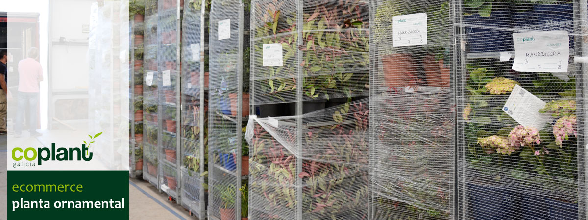 tienda online planta ornamental
